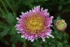 aster-1043949_960_720
