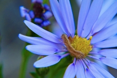aster-56943_960_720