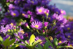 aster-968529_960_720