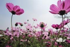 flower-1722014_960_720