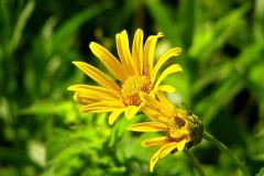 flower-643486_960_720