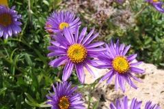 flower-643493_960_720