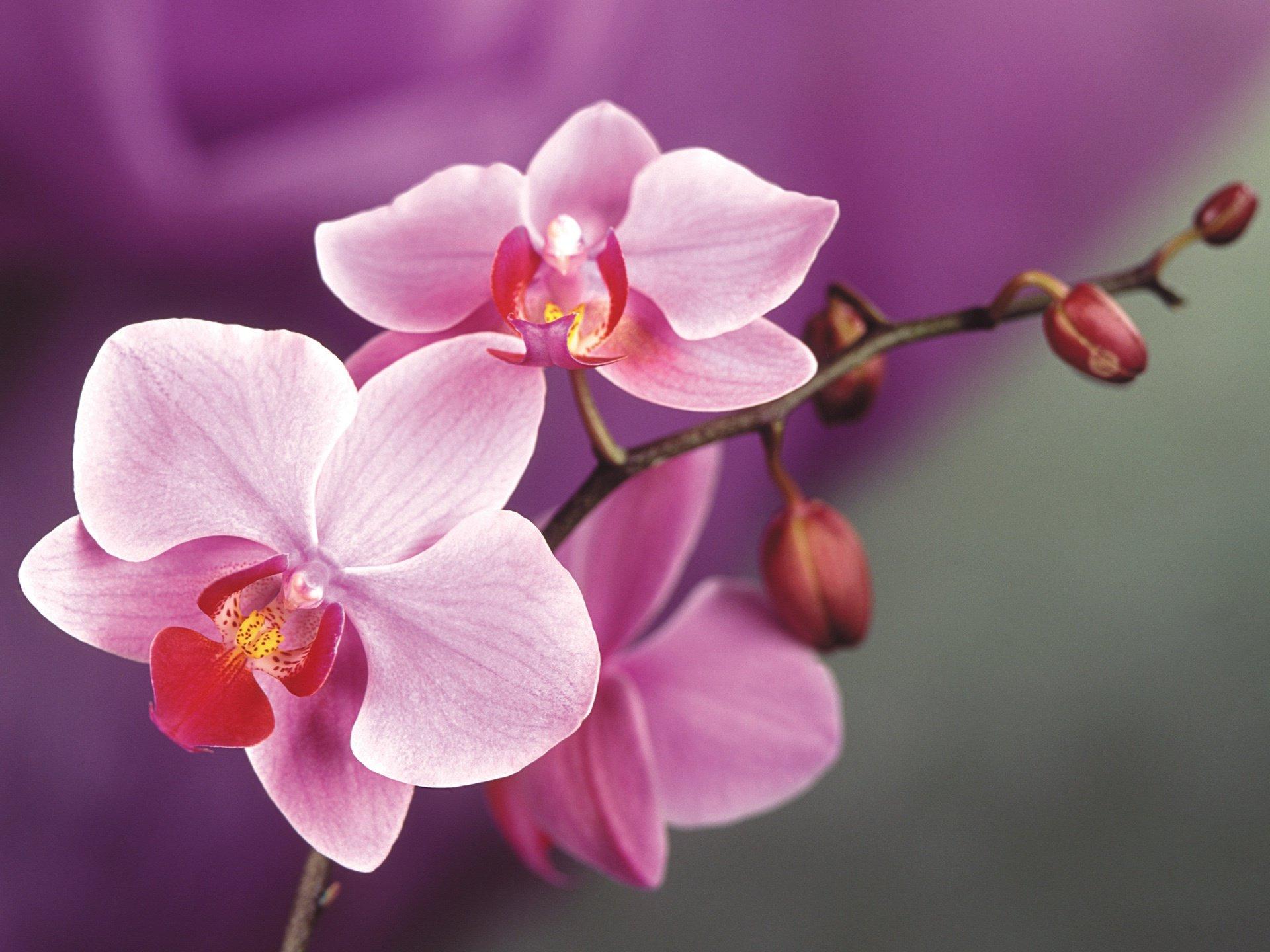 Фото цветов орхидеи