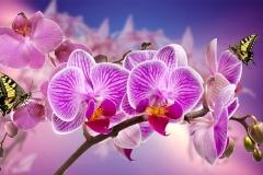 Орхидеи-в-интерьере-4