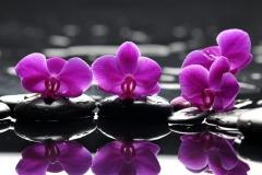 sirenevaya-orhideya