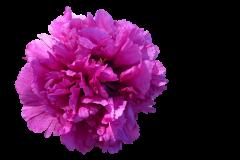 flower-1989044_960_720