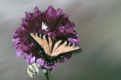 flower-2012608_960_720