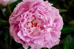flower-2086749_960_720