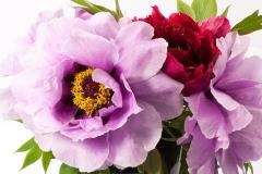 bouquet-342213_960_720
