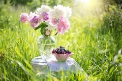cherries-1450154_960_720