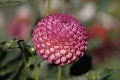 flower-1567201_960_720