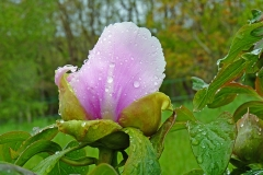 flower-1836277_960_720
