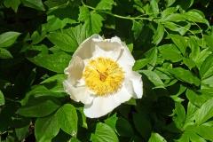 flower-1984048_960_720