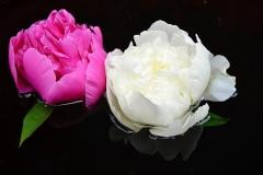 flower-2115100_960_720
