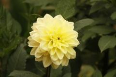 flower-55432_960_720