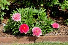 flowers-1408759_960_720