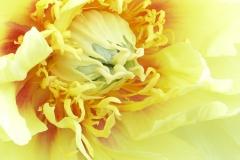 flowers-338821_960_720