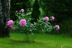 flowers-361822_960_720