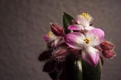 flower-1390056_960_720