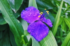 garden-1583536_960_720