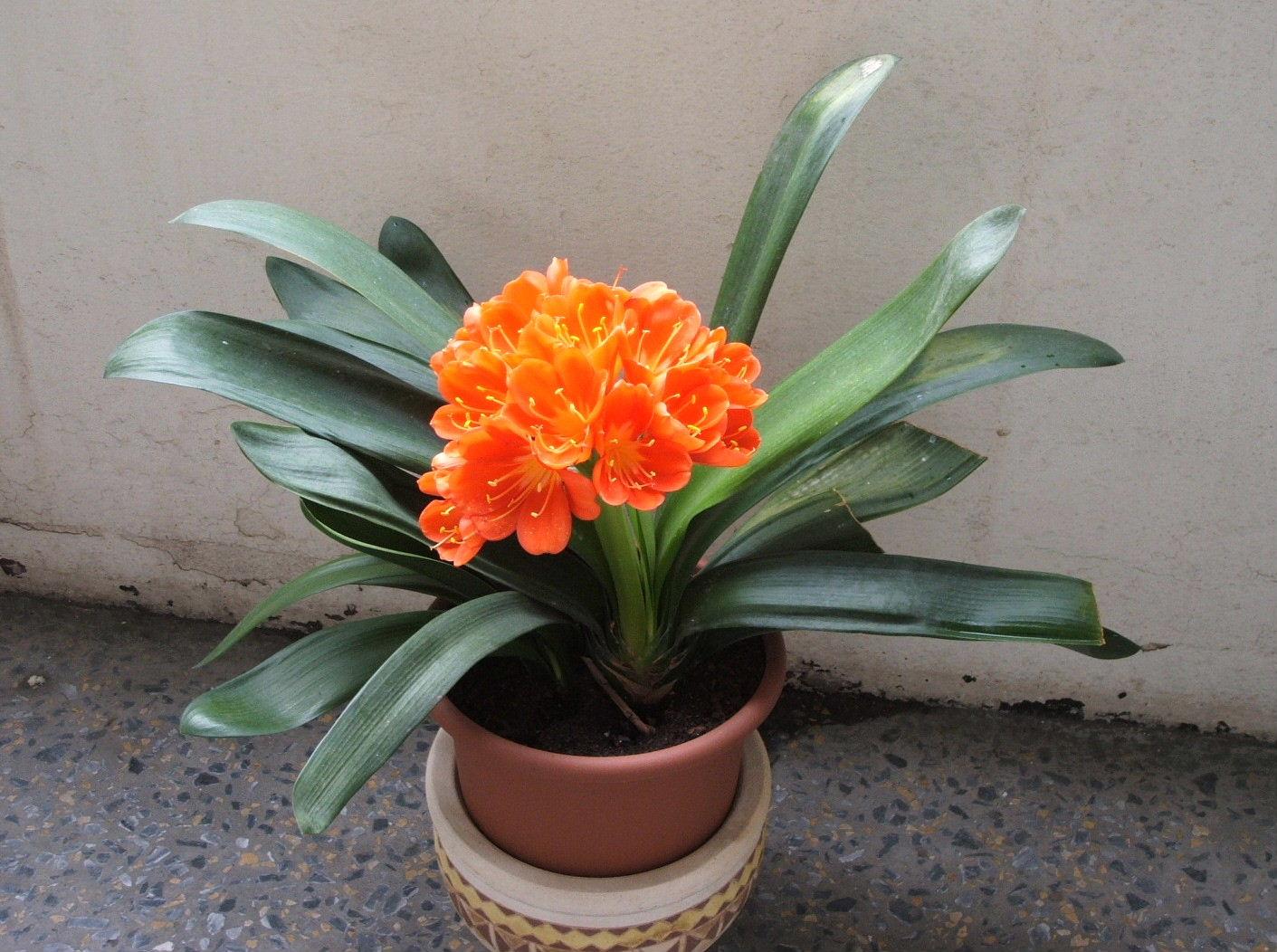 Комн цветы фото и уход