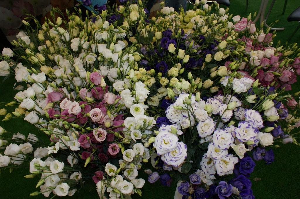 Лизиантус фото цветов цена за одну
