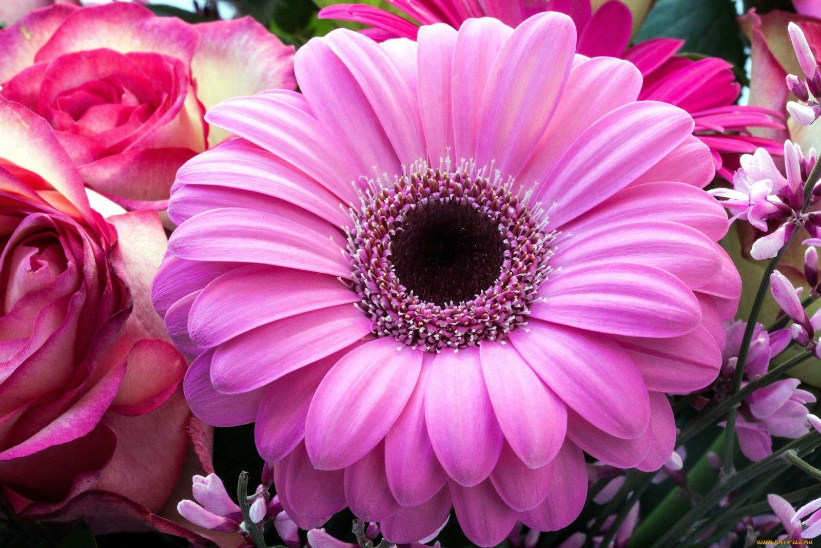 Фото цветов напечать