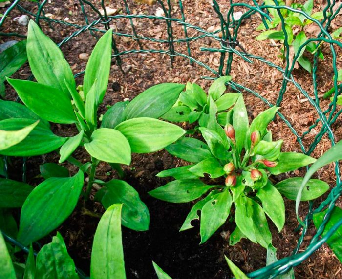Травянистые растения:описание,фото,применение в кулинарии