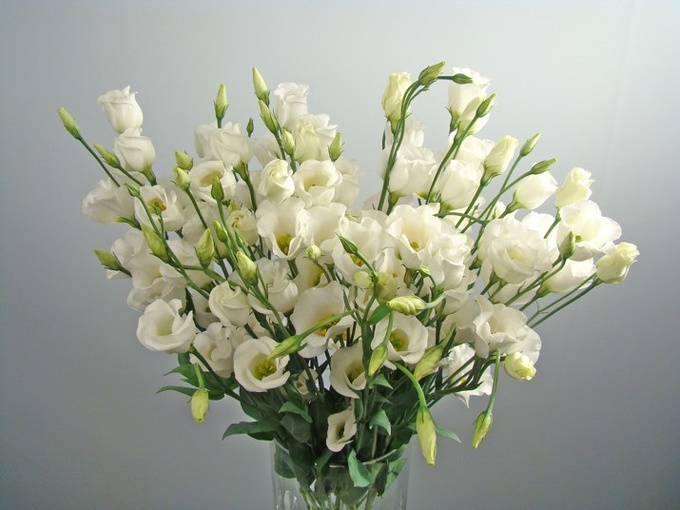 Цветы лизиантус фото