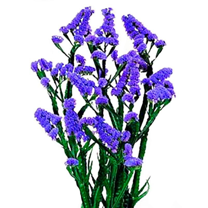 Цветок статица- посадка, выращивание и уход в открытом грунте