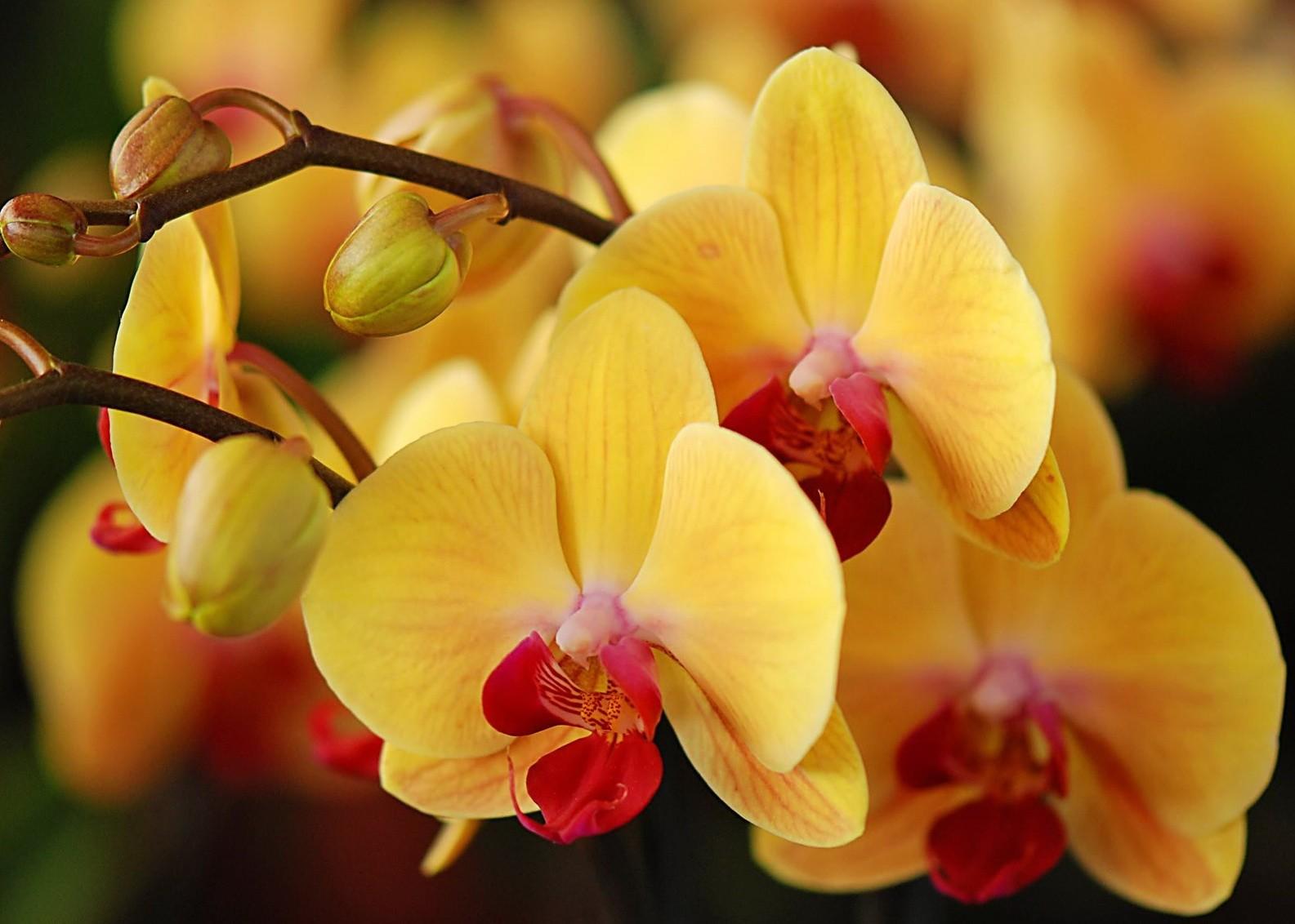 Орхидея: уход и выращивание в домашних условиях.