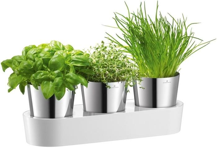 Выращивание пряных трав на подоконнике в комнатных условиях