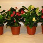 5 советов от эксперта: как правильно выращивать комнатные растения