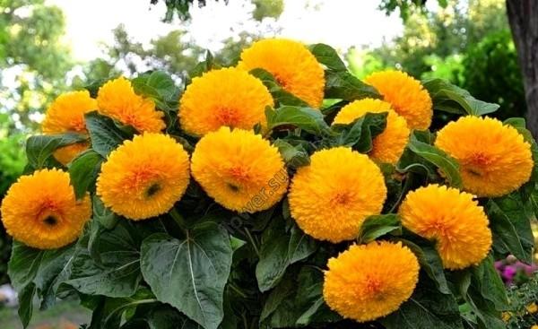 Выбираем цветы для посадки.