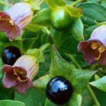 Ядовитые растения и все,что нужно знать о них.