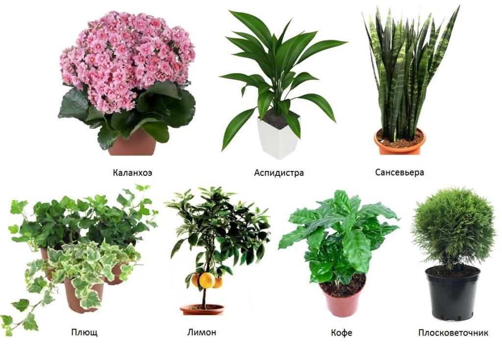 Лучшие домашние цветы для дома цветущие