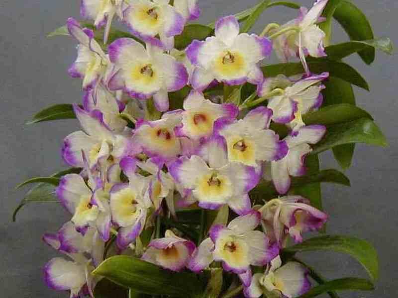 Виды орхидей — описание фото видео.