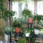 Как ухаживать за комнатными растениями, Советы и рецепты