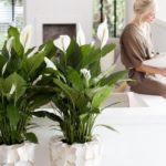 Комнатные растения в доме: приметы и суеверия