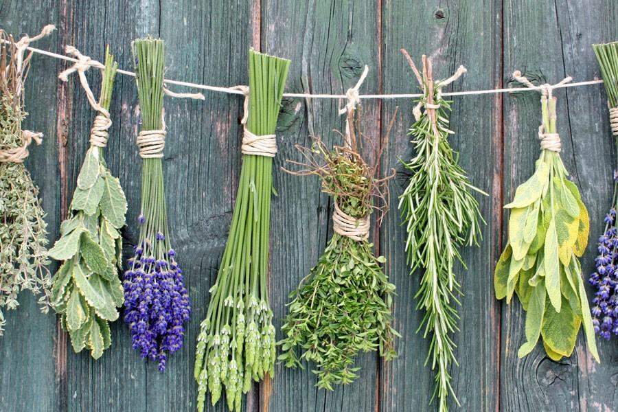 Сушка и хранение лекарственных растений