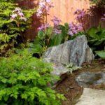 Растения которые любят тень в саду