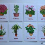 Как нужно ухаживать за комнатными растениями?