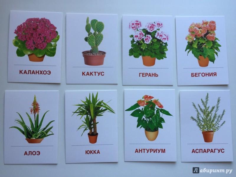 Все растения по алфавиту с картинками