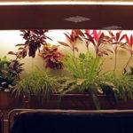 Освещение для комнатных растений.