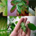 Комнатные растения: способы борьбы с вредителями и болезнями.