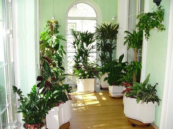 Как нужно правильно размещать растения в комнате?
