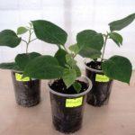Размножение комнатных растений: способы,фото,видео.