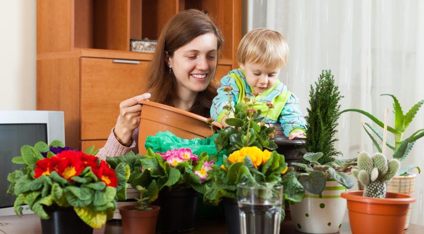 Комнатные растения и ваше здоровье.