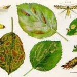 Вредители комнатных растений: описание,виды,борьба,фото,видео.