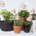 Освещения для комнатных растений.